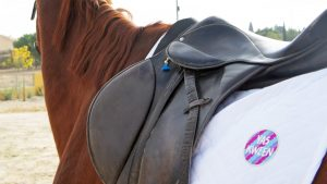 East Coast Equestrian - Portada