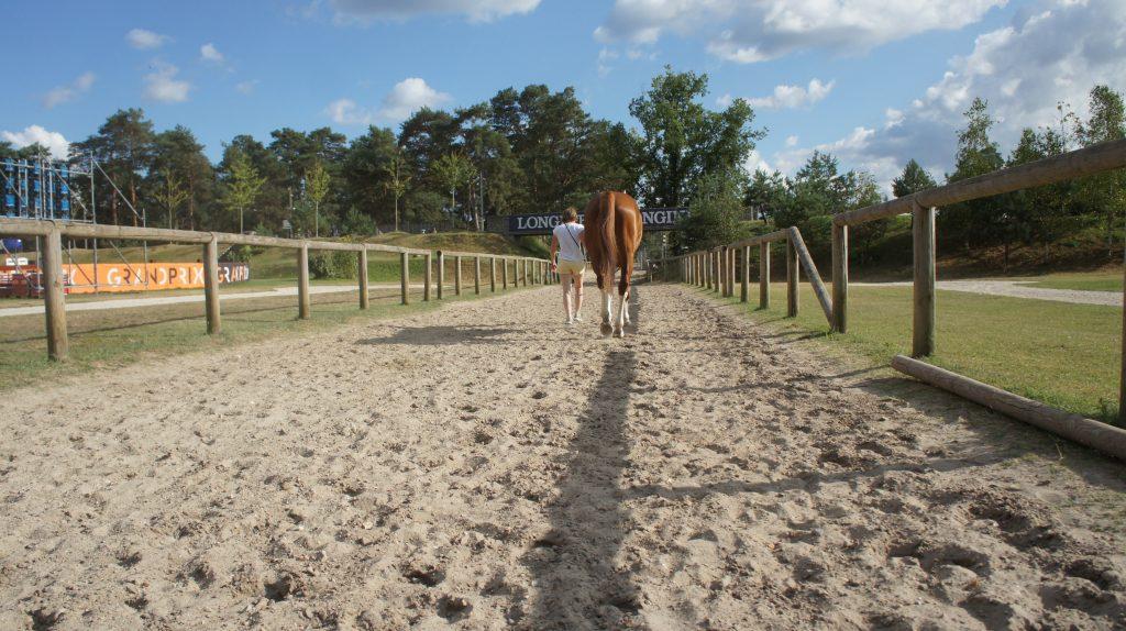 Un paseo por Le Grand Parquet de Fontainebleau