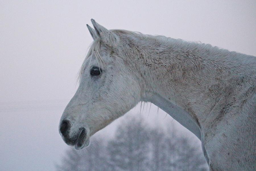 ¿Esquilar o no esquilar a mi caballo?