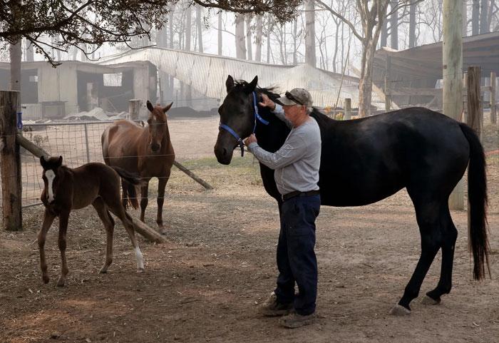 propietario con sus caballos en australia, con la ayuda de Equestrian Fire Relief Australia, podría conseguir asegurar el bienestar de sus caballos