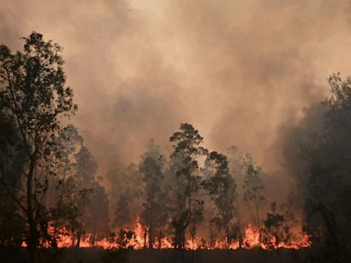 fuegos en australia