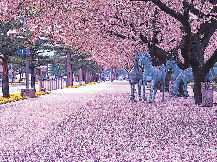 parque central de Towada, Aomori, donde tiene lugar el Sakur yabusame