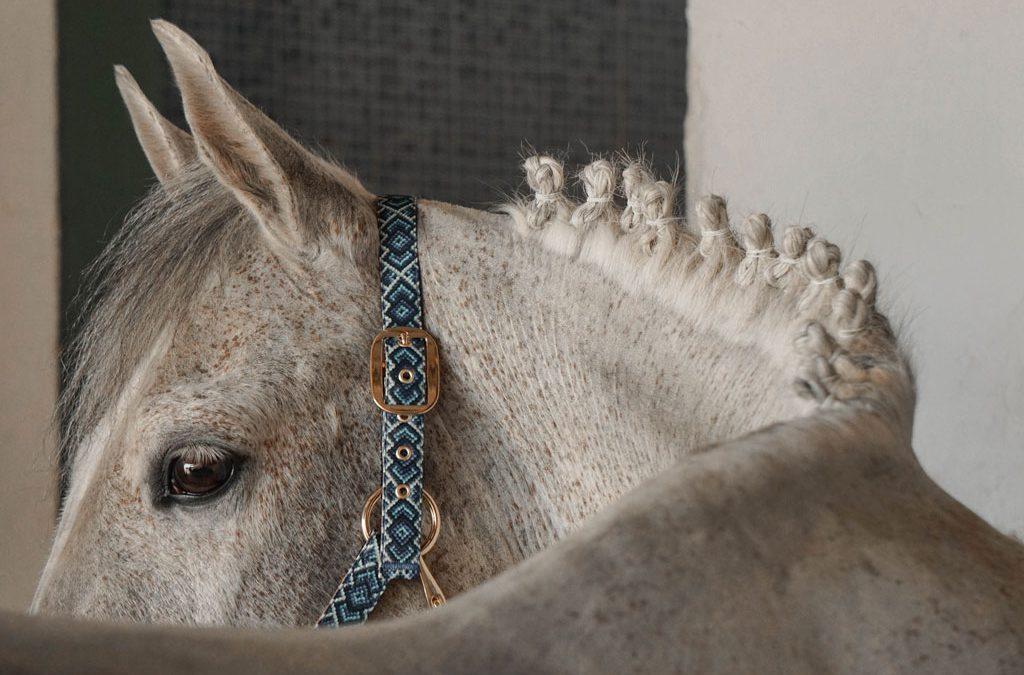 Trenzar a mi caballo: Moñetes