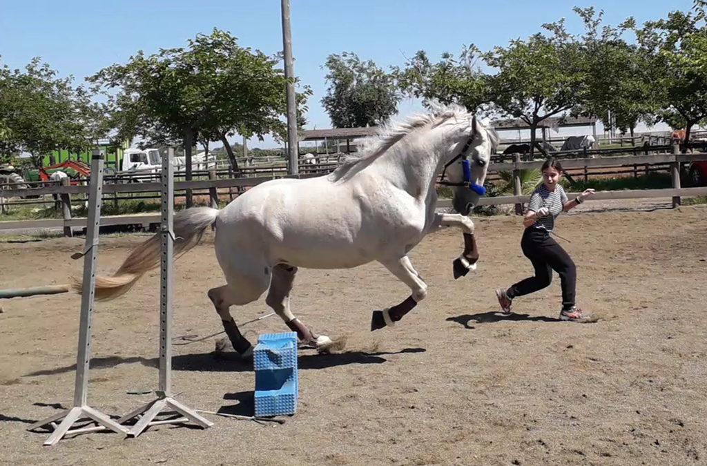 Mi caballo y yo: Laia y Cali