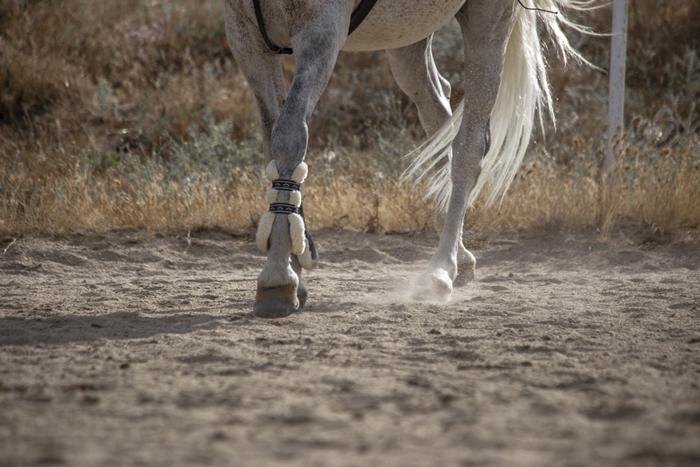 patas de un caballo con protectores