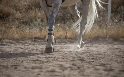 Montar a caballo en verano: cosas a tener en cuenta