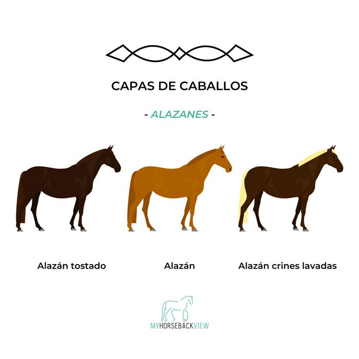 capas habituales del caballo: alazán tostado, alazán y alazán de crines lavadas