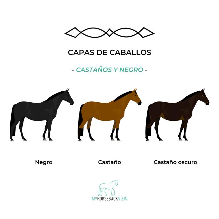 capas habituales del caballo: negro, castaño y castaño oscuro