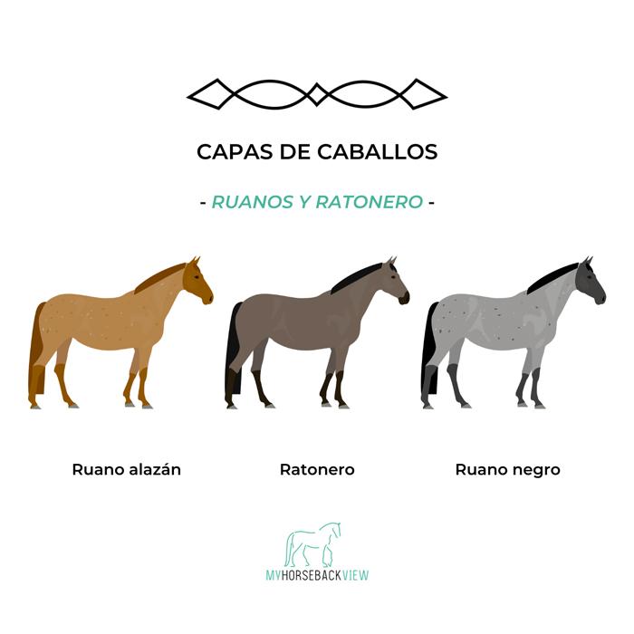 capas habituales del caballo: ruano alazán, ratonero, ruano negro
