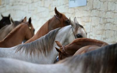 Capas habituales del caballo