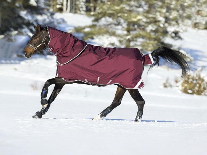 caballo galopando con manta exterior invierno
