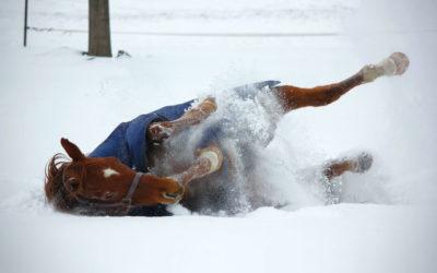 ¿Cómo elegir manta para mi caballo este invierno?