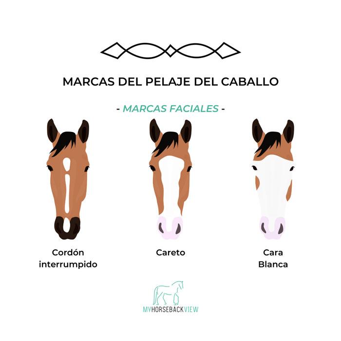 caballos con manchas en el pelaje de la cara: cordón interrumpido, careto y cara blanca