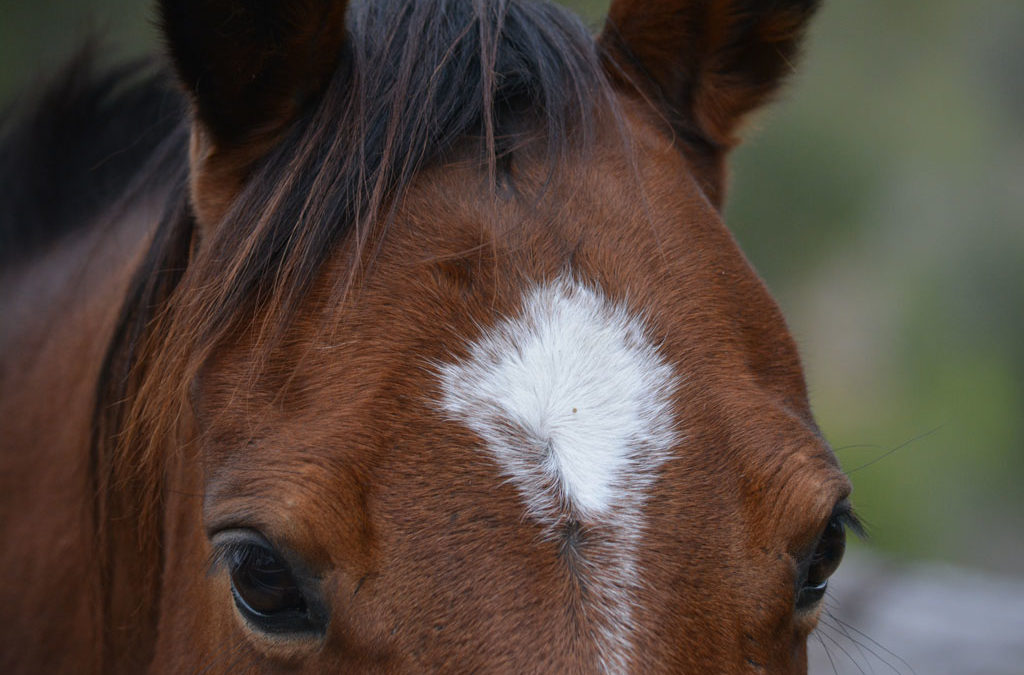 Marcas en el pelaje del caballo
