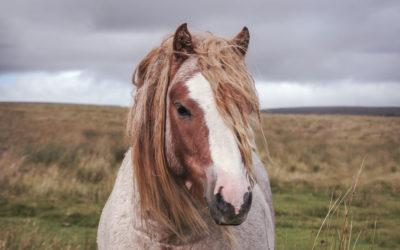 10 datos curiosos sobre los caballos