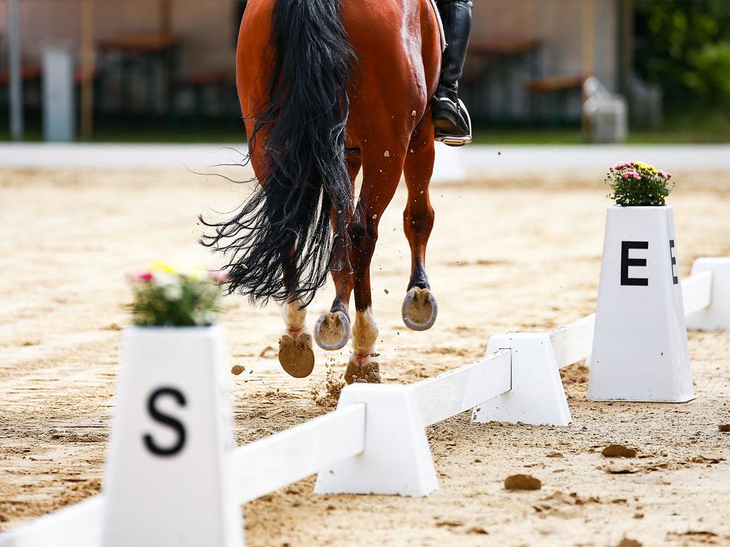 caballo haciendo una reprise de doma