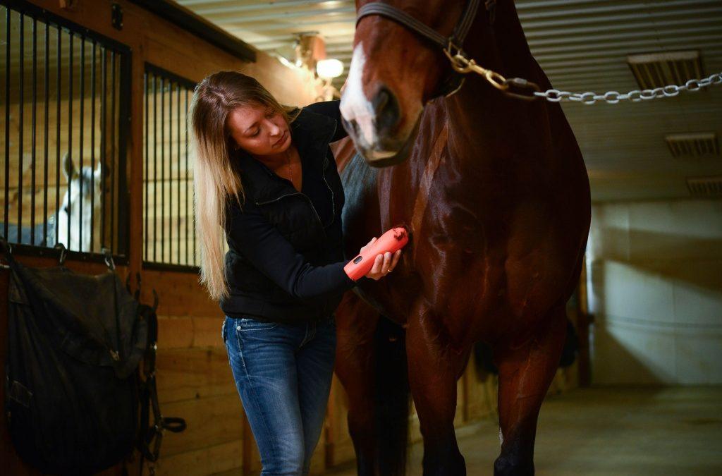 ¿Cómo elegir la esquiladora para nuestro caballo?