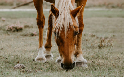 ASMR para amantes de los caballos
