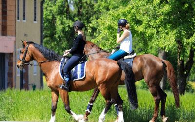 Ayudas naturales y artificiales en la equitación